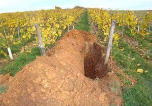 1a_soil_pit_in_vineyard