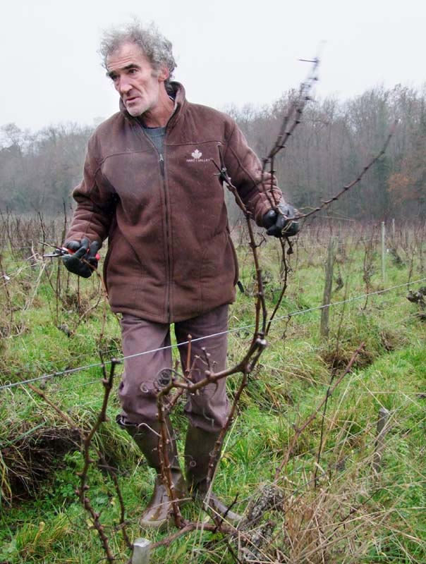 1CRB_didier_barrouillet_taking_out_pruned_canes