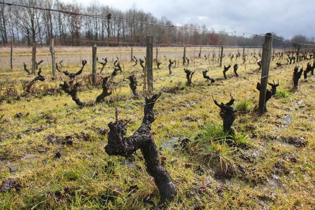 1christian_venier_old_vines
