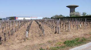 1libourne_herbicide_vineyard