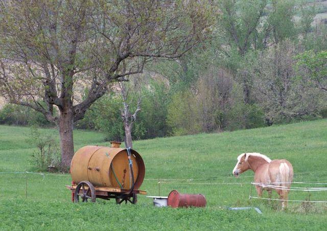 1deux_terres_ardeche_horse_in_prairie