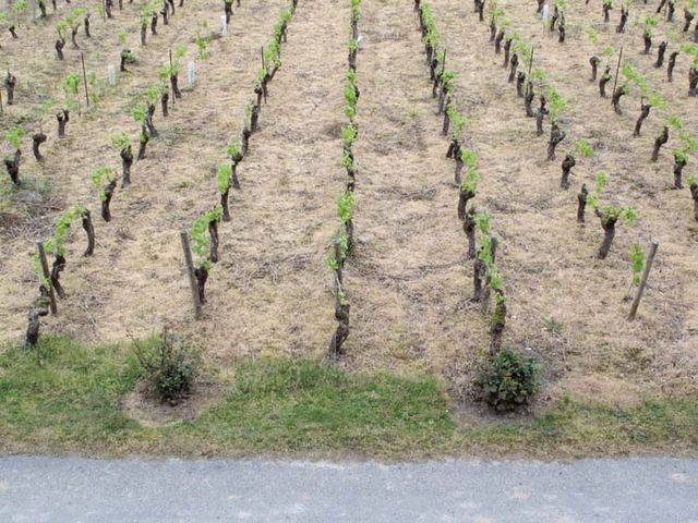 1herbicide_vineyard13