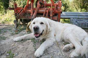 1sebastien_bobinet_dog_in_the_shade