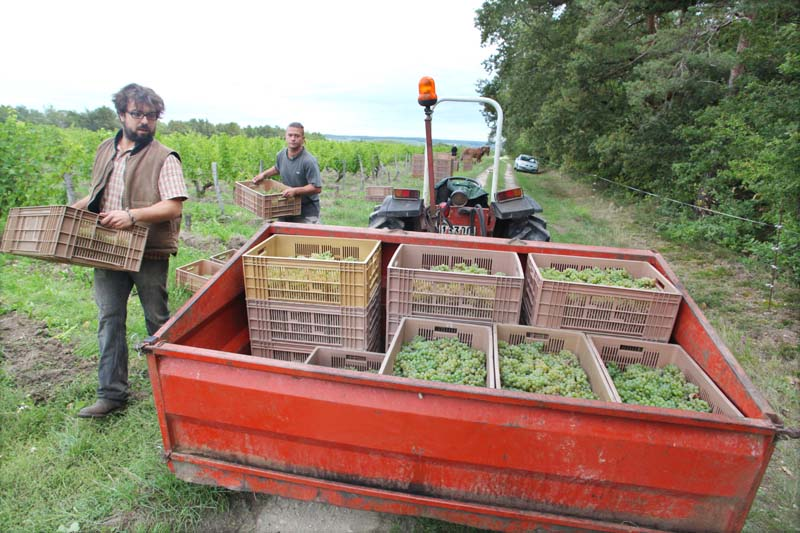 1julien_pineau_loading_boxes_tractor