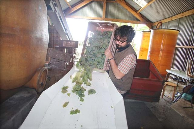 1julien_pineau_unloading_the_sauvignon