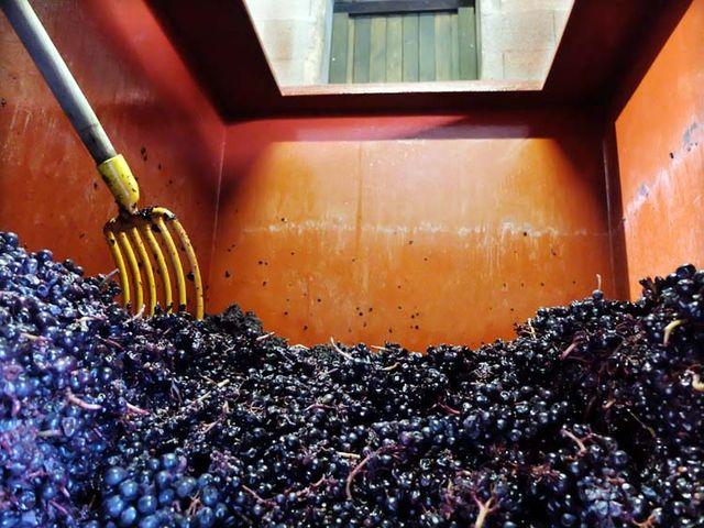 1yvon_metras_pressing_inside_of_fermenter