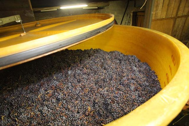 1julie_balagny_carbonic_maceration_fleurie