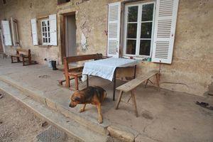 1julie_balagny_dog_along_farm