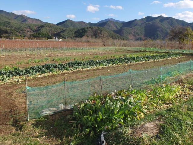 1beau_paysage_vineyard_alternating_with_vegetables