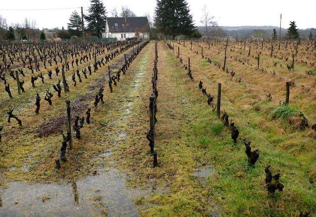 1conventional_along_organic_vineyard