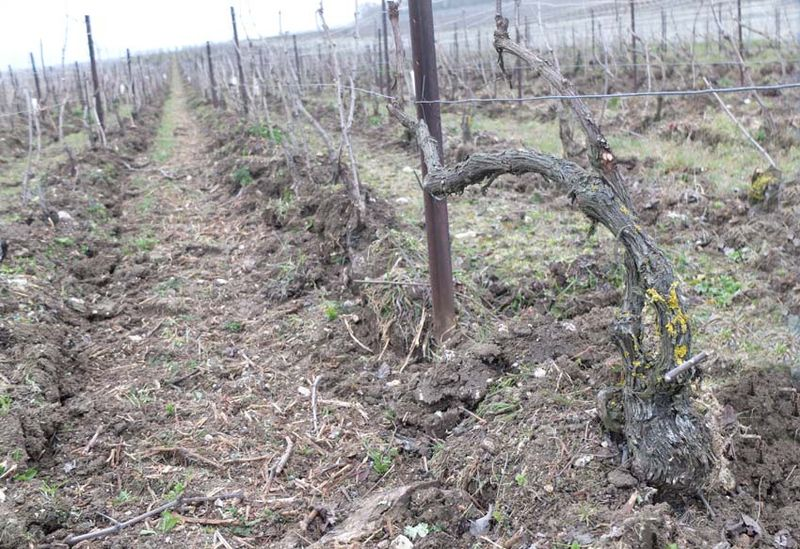 1franck_pascal_champagne_plowed_row