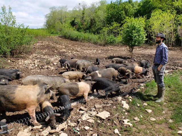 1oronce_de_beler_black_pigs