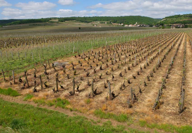 1pesticides_near_vosne_romanee