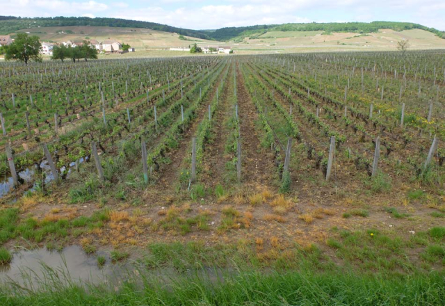 1pesticides_trick_plow_vosne_romanee