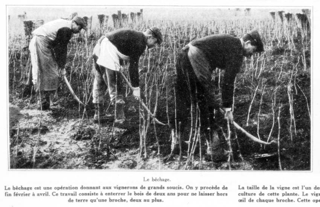1champagne_1920s-2bechage_tilling