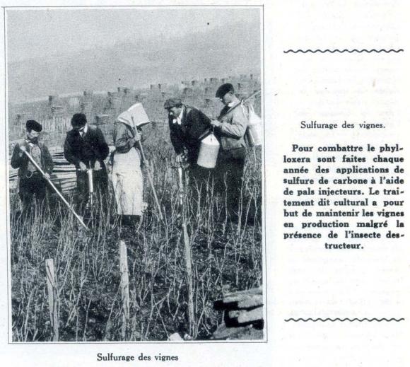 1champagne_1920s-4sulfurage2