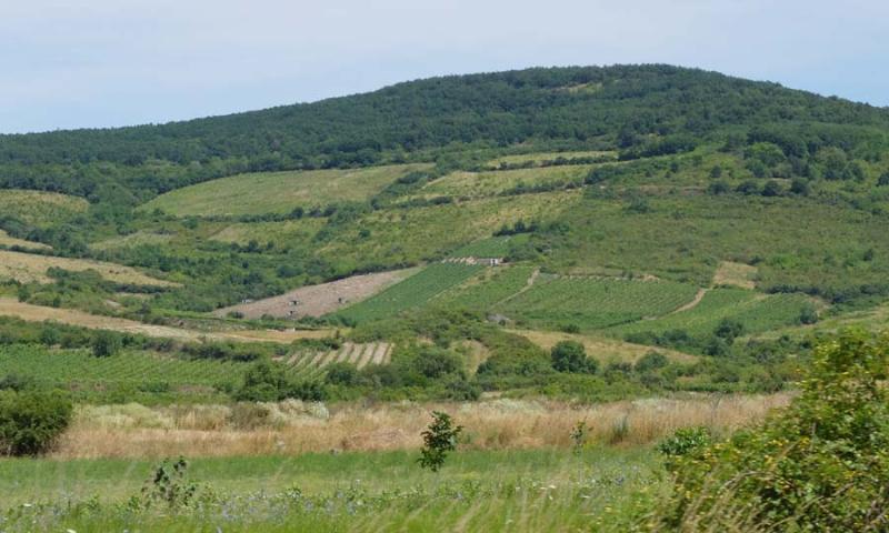 1tallya_vineyard_slopes_parcels
