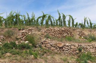 1alkonyi_laszlo_old_terrace_walls