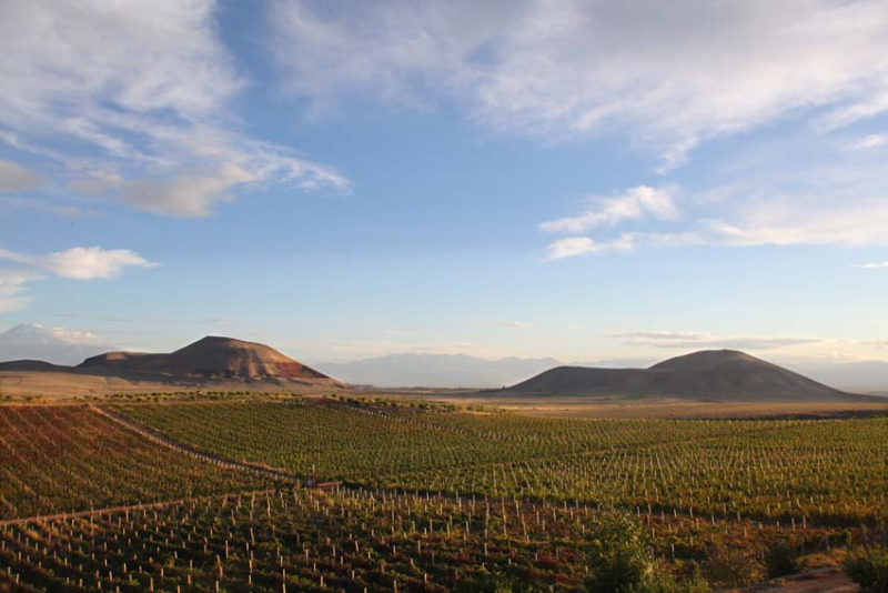 1armas_estate_vineyards_hills