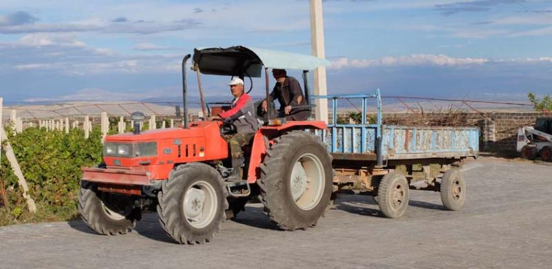 1armas_estate_vineyard_workers_tractor