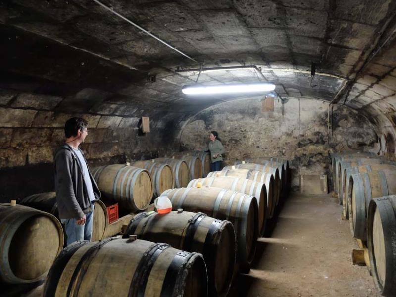 1noella_morantin_pouille_cellar_sauvignon