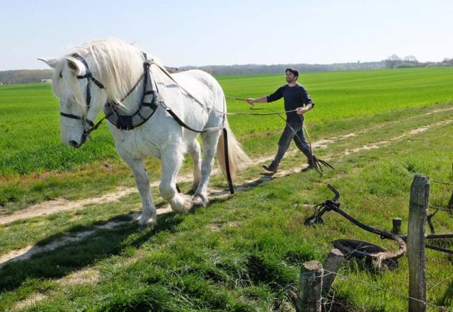 1cedric_bernard_positioning_horse