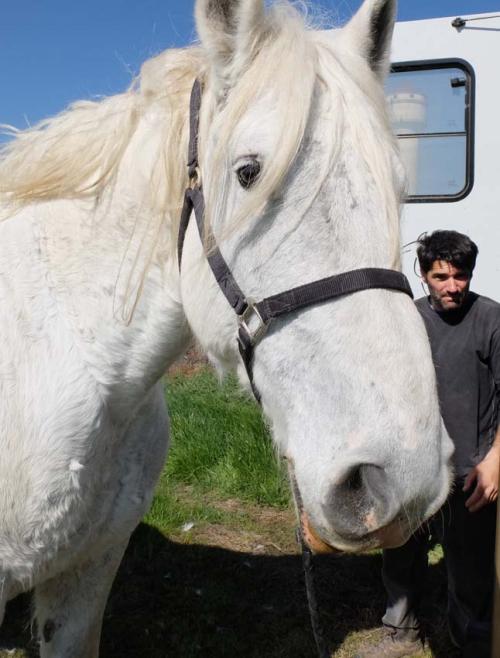 1cedric_bernard_monty_horse