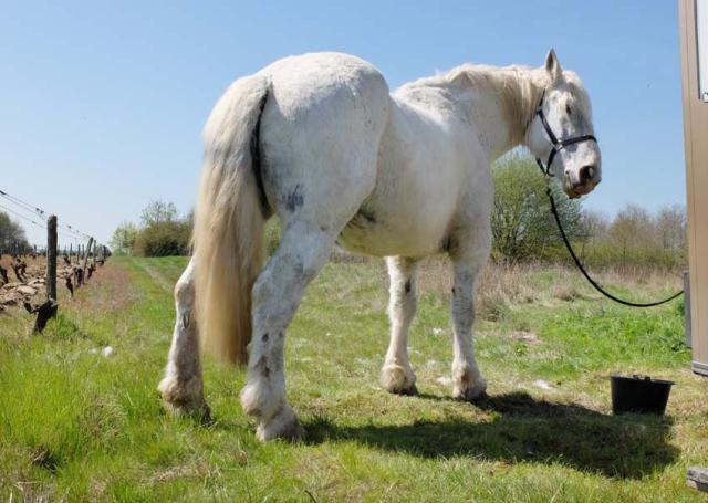 1cedric_bernard_monty_horse_lunchtime
