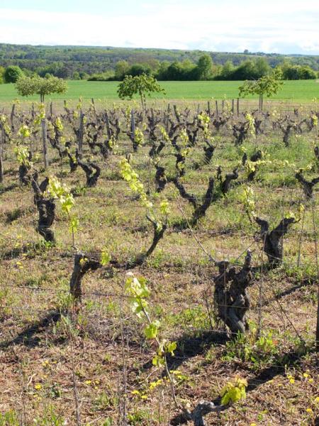 1francois_saint_leger_happy_vines