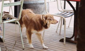 1jousset_montlouis_wine_bar_a_cute_dog