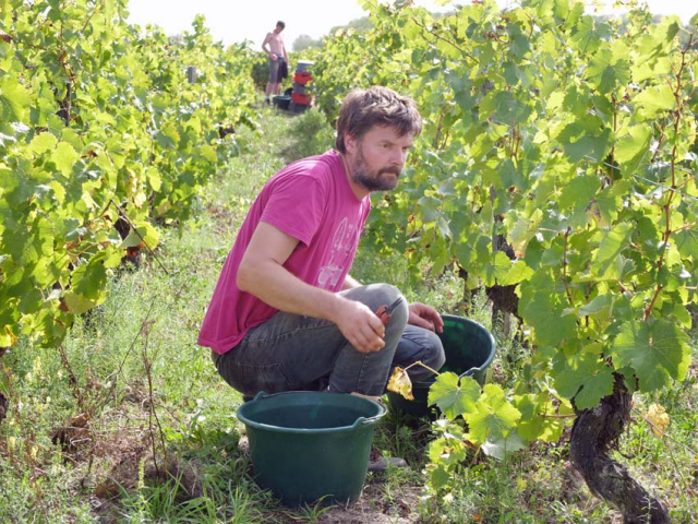 1ludovic_chanson_picking_chenin