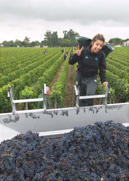 1haut_brion_harvest2017