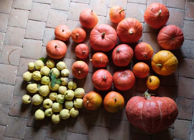 1quince_pumpkins