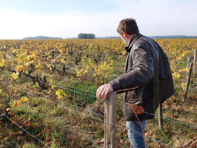 1frantz_saumon_vines_landes_plateau
