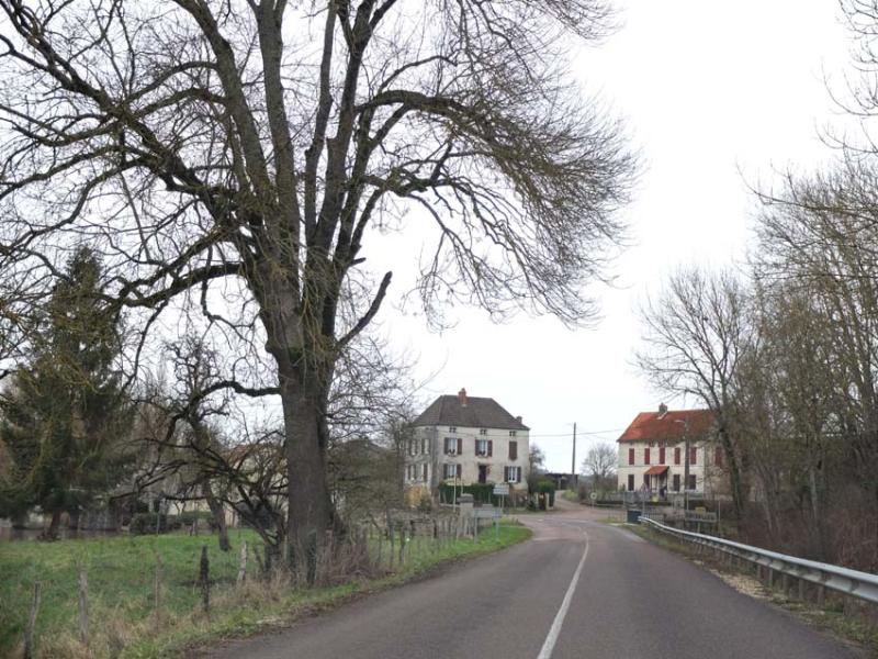1nicey_distillery_griselles_tree