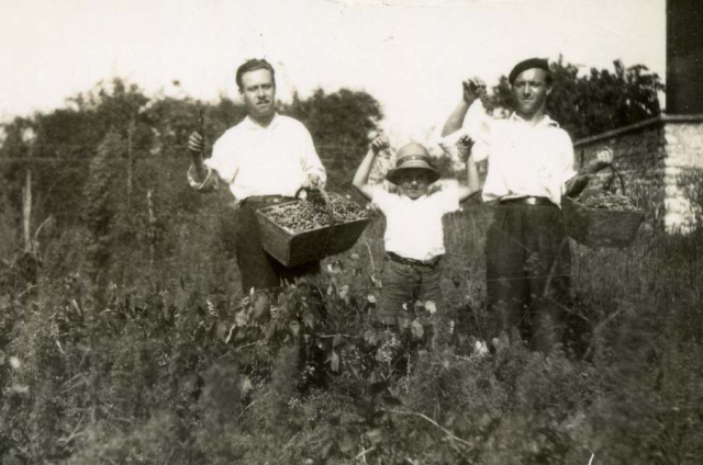 1wine_scenes_harvest_picking1939