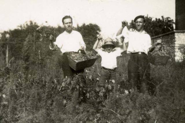 1wine_scenes_harvest_picking1939