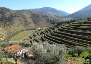 1douro_niepoort_view_on_terraces