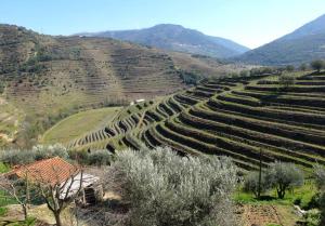 1douro_niepoort_view_on_terraces