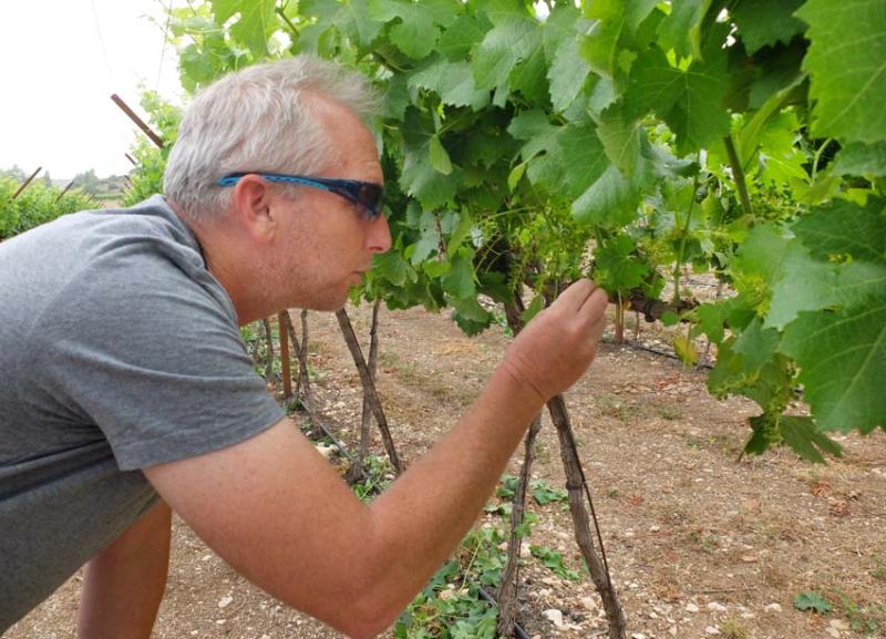 1sphera_doron_looking_at_baby_grapes