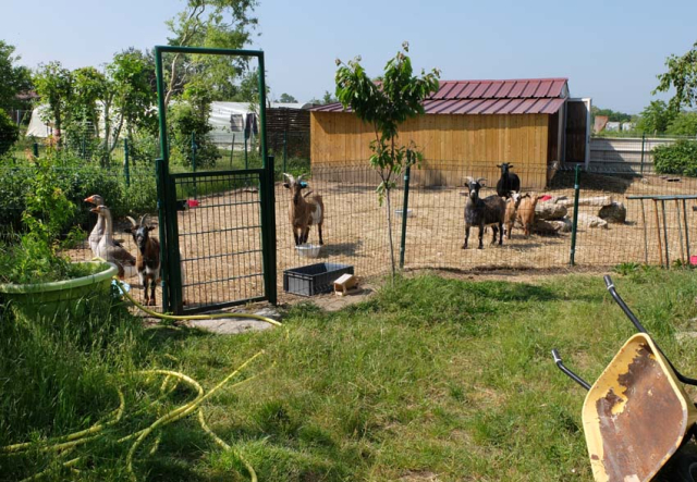 1madon_bassecour_farm_animals