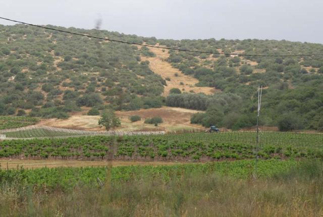 1sphera_vineyards_hills