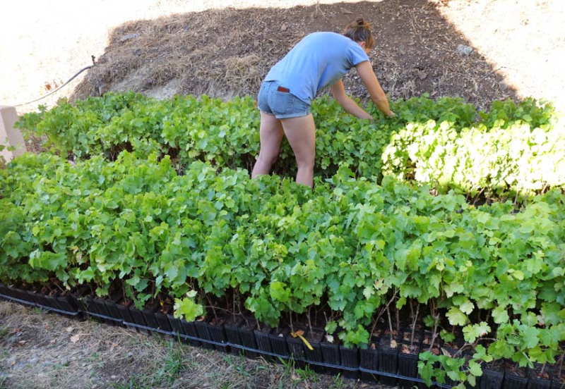1frenchtown_cara_checking_baby_vines