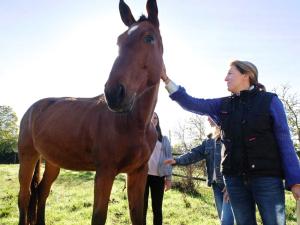 1carole_kohler_horse
