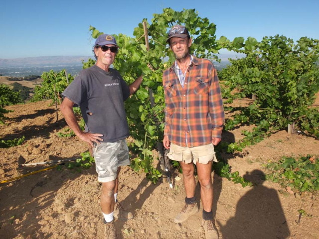 1p_martin_ray_rick_fred_vineyard