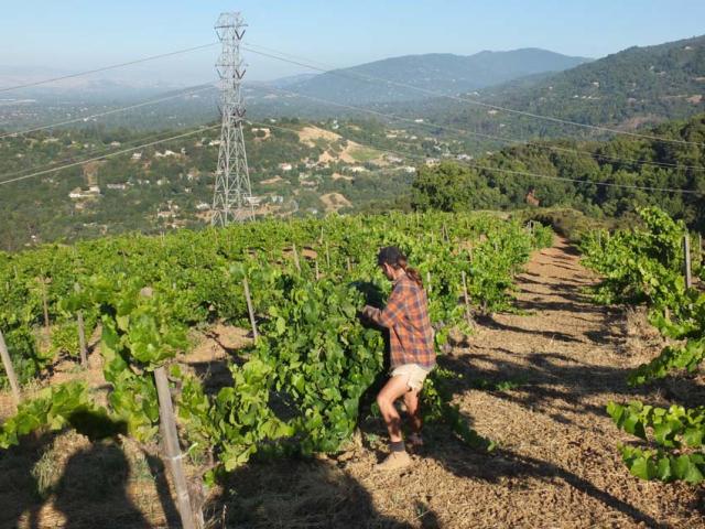 1p_martin_ray_vineyard_landscape