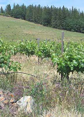 1renaissance2006_vines