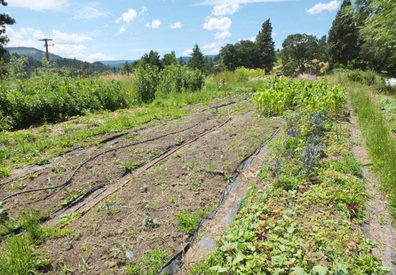 1hiyu_wine_garden_vegetables