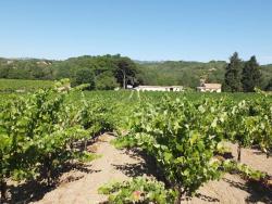 1martha_stoumen_venturi_vineyards