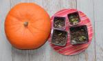 1news_pumpkin_shoots